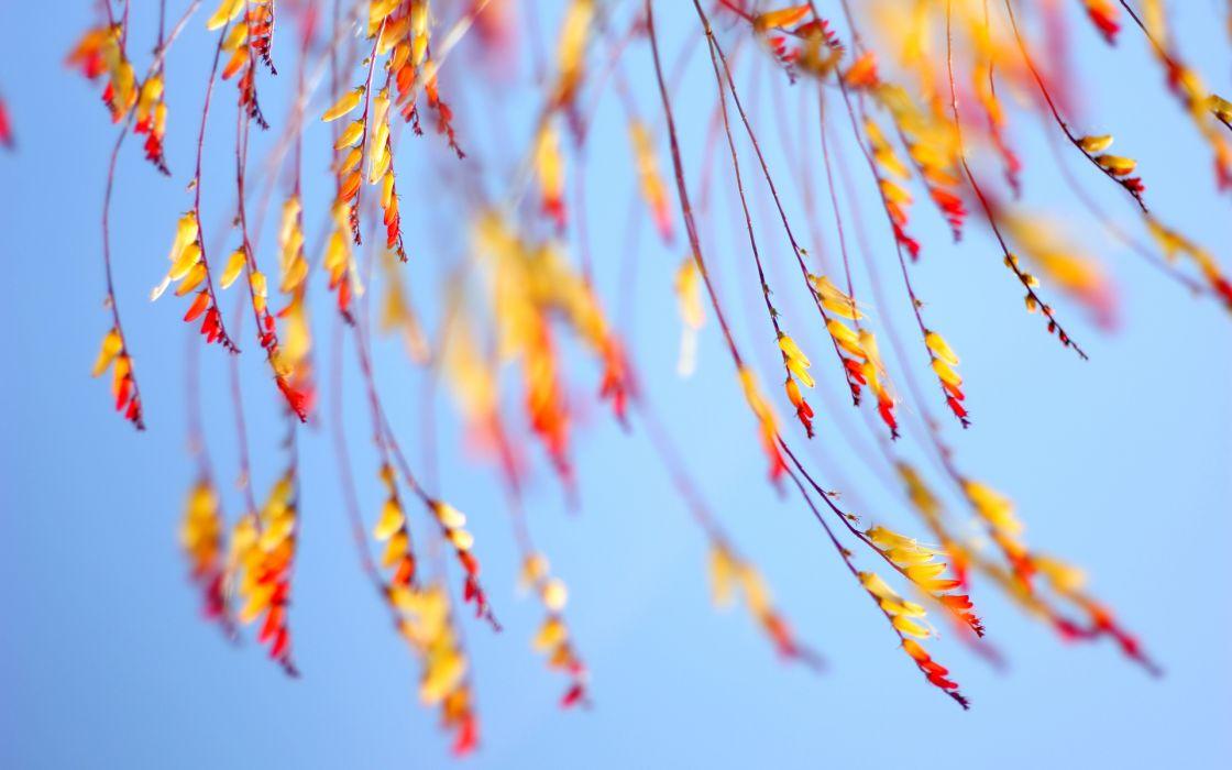 macro autumn fall wallpaper