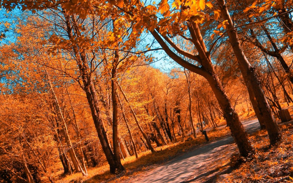 landscapes forest autumn fall leaves path wallpaper