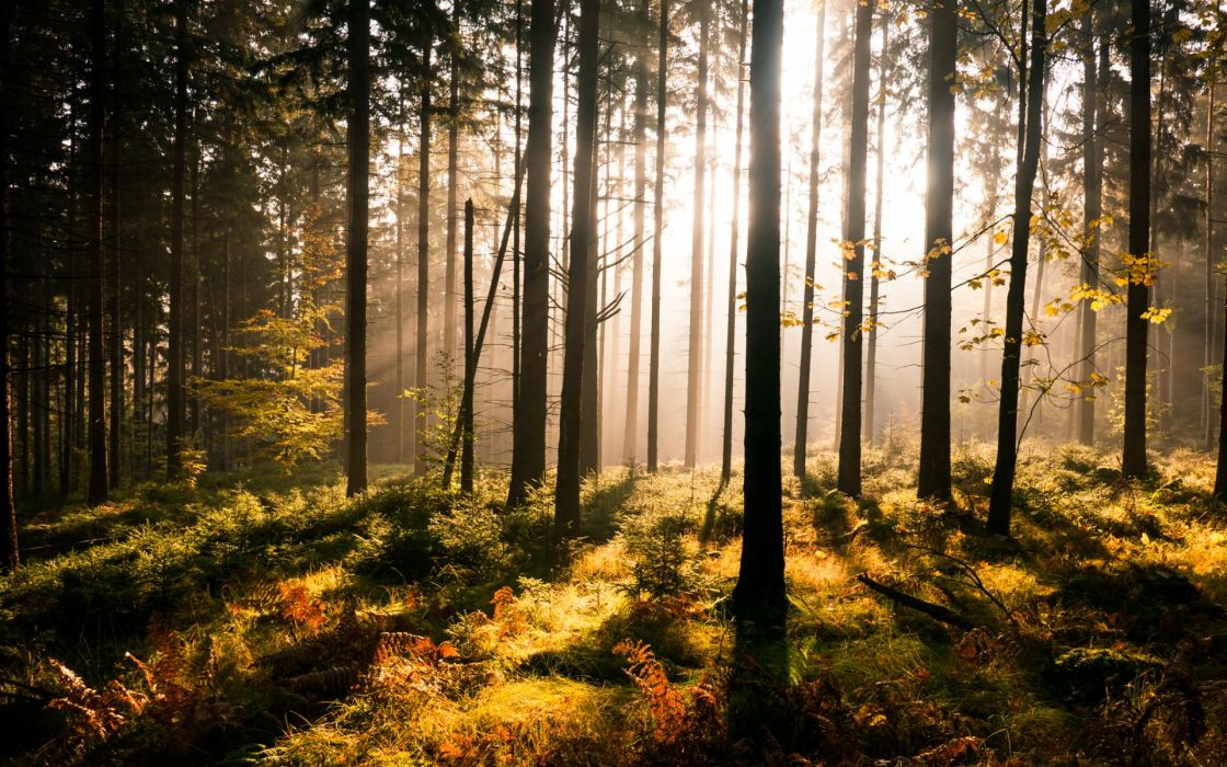 landscapes forest sun light beams rays wallpaper