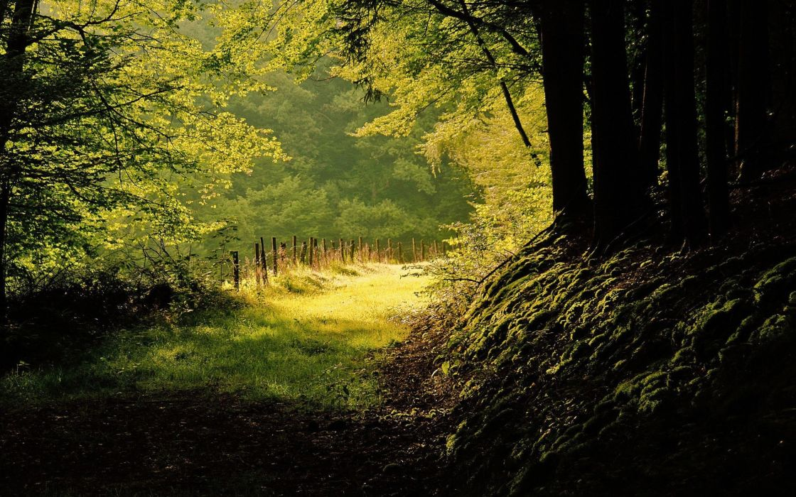 landscapes forest path sunlight ray beam wallpaper