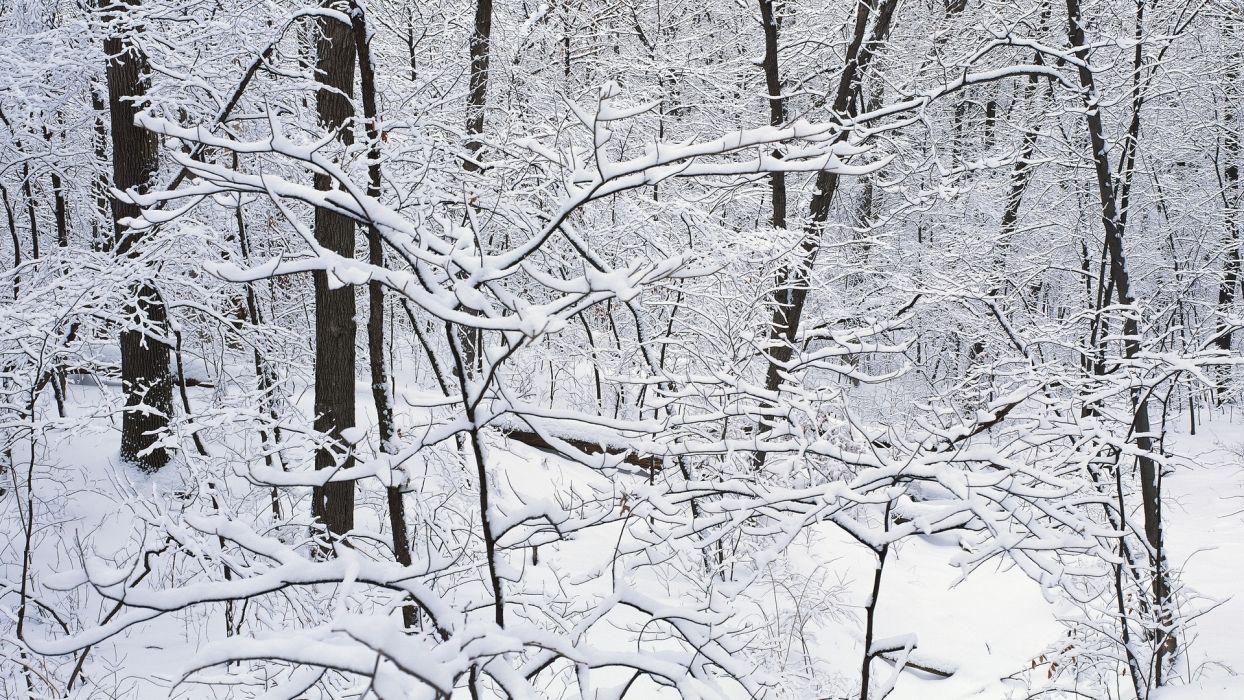 winter landscapes snow wallpaper
