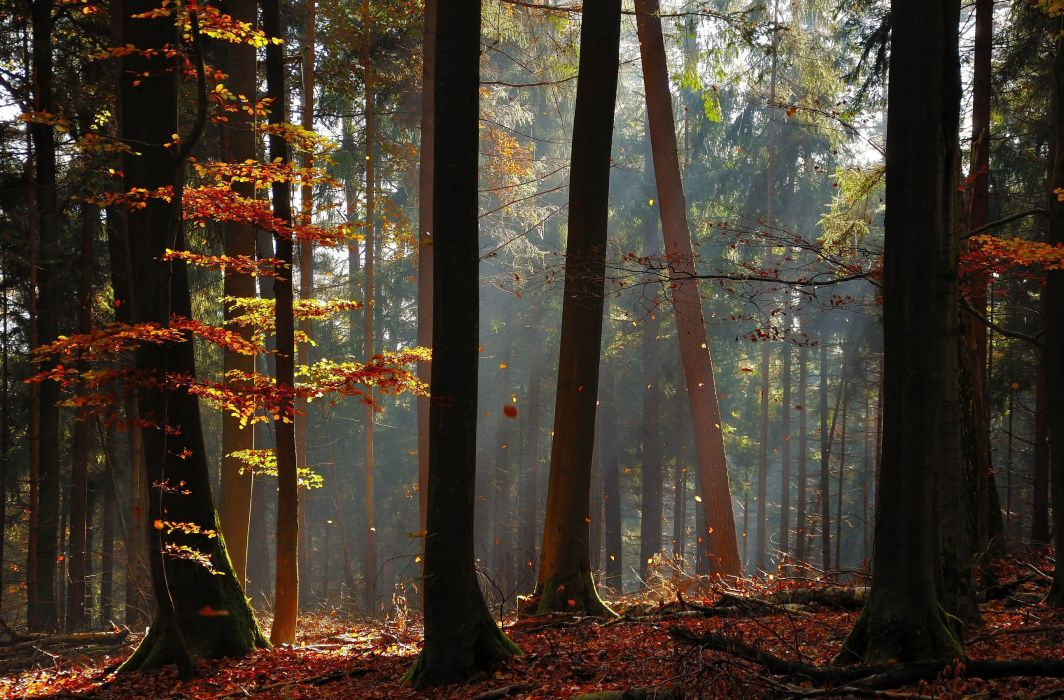 landscapes forest sunlight rays beam leaves autumn fall wallpaper