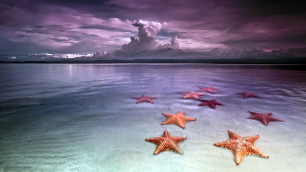 Starfish Ocean Reflection Tropical Sand Sky Clouds Wallpaper