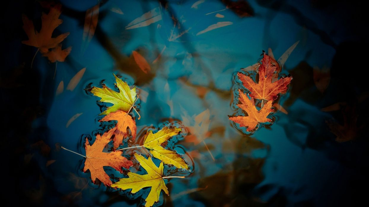 puddle puddle autumn fall wallpaper