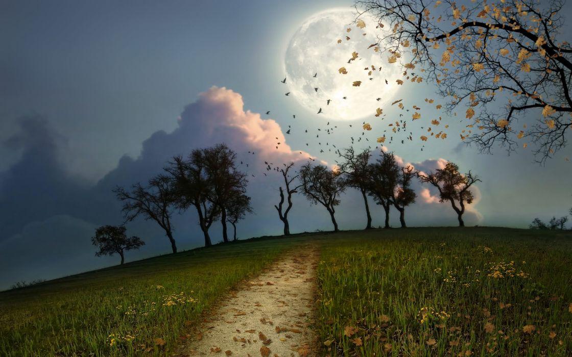 cg digital art manip night moon birds flock trees path sky wallpaper