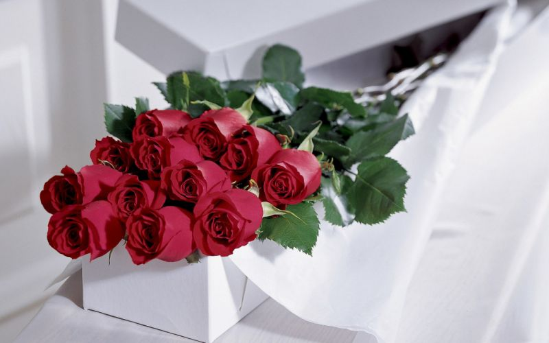 love romance mood roses red bouquet wallpaper