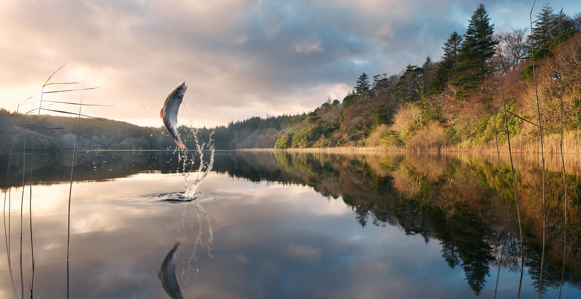 Lakes water sunrise sunset sky trees shore forest fishing sports wallpaper | 1920x989 | 30553 ...