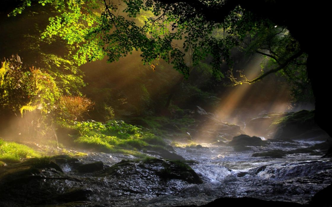 lanscapes trees forest water rapids sunlight beam ray wallpaper