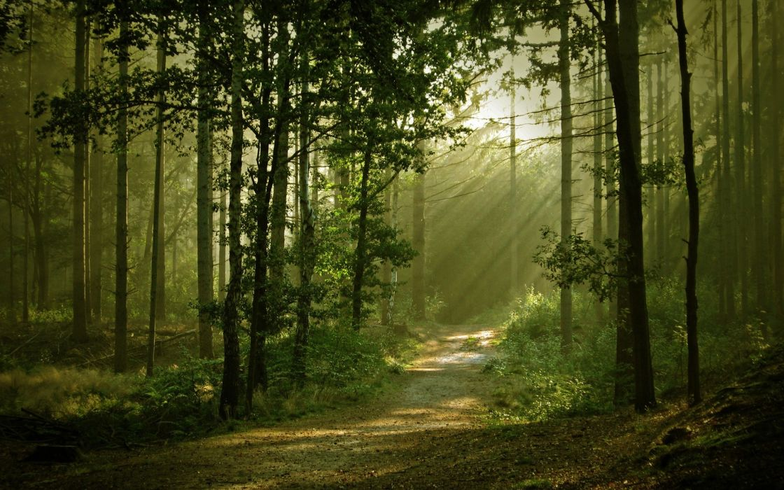 landscapes forest path sunlight filtered beam ray wallpaper