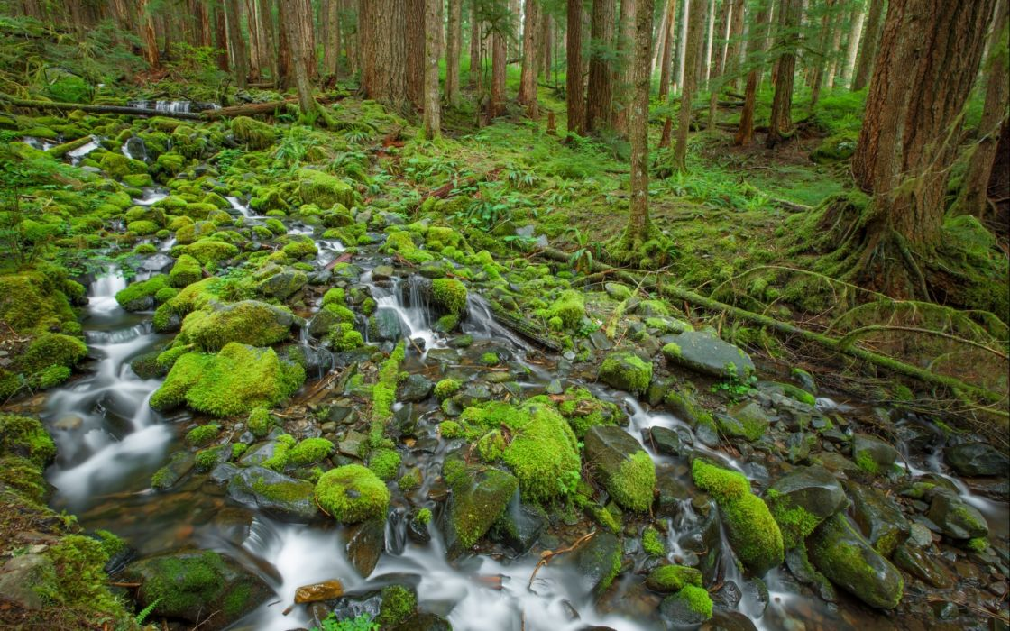 stream landscapes rees forest wallpaper