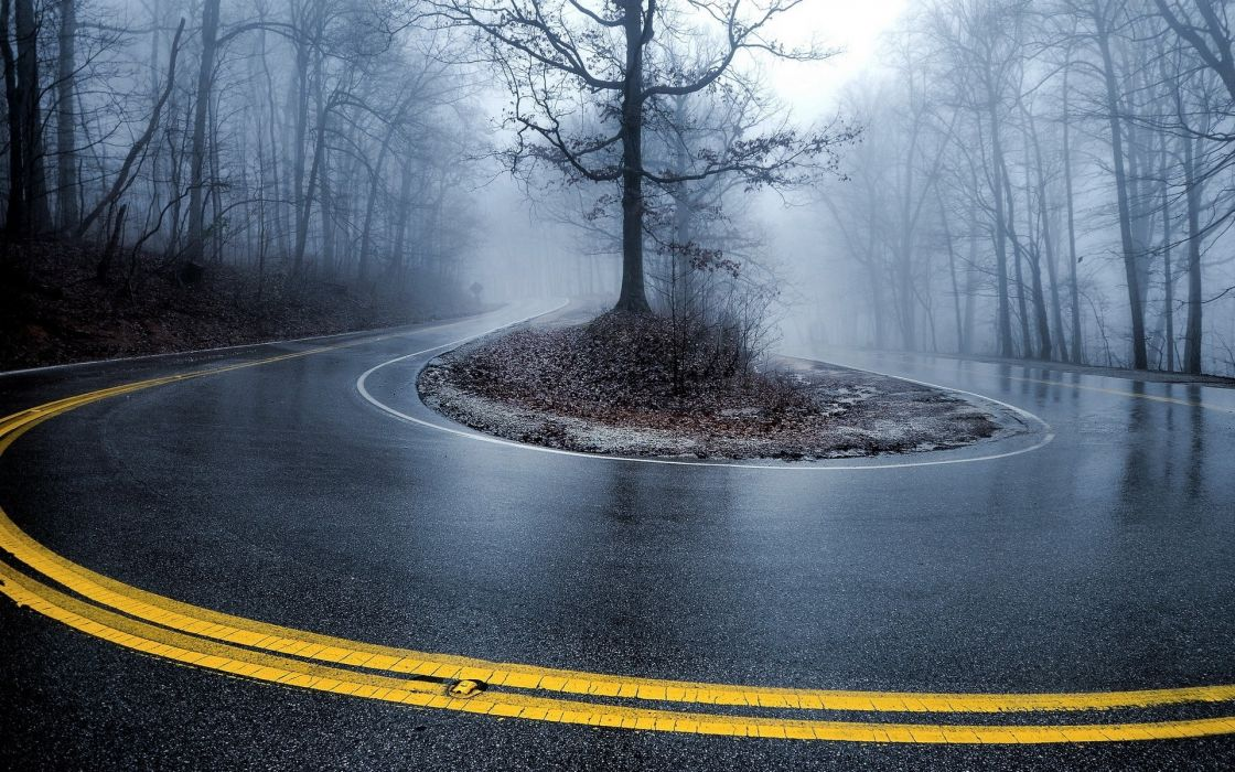 landscapes rain trees forest fog nature wallpaper