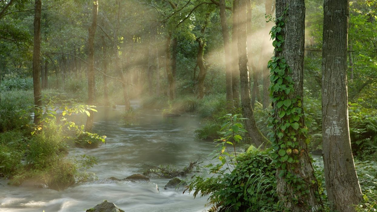 landscapes tress forest sunlight beam rays wallpaper