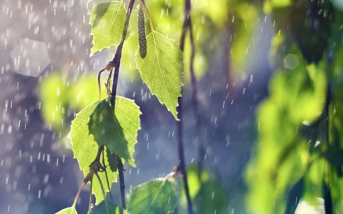 leaves trees rain wallpaper