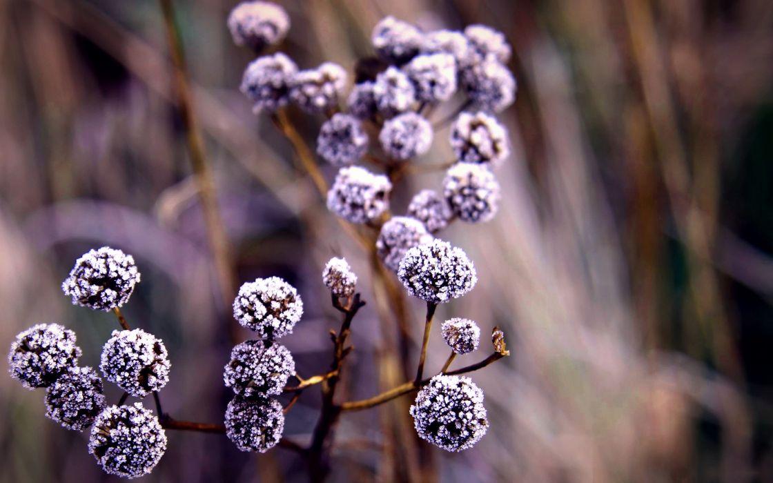 macro close up frost autumn fall wallpaper
