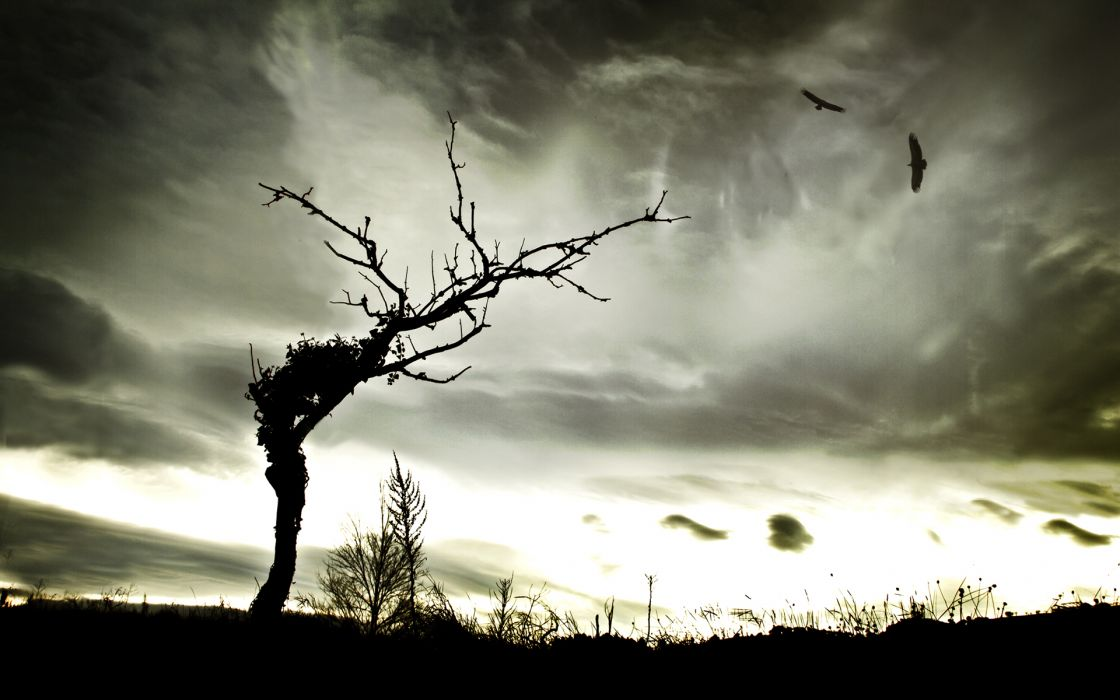 sky landscapes birds hawks clouds wallpaper