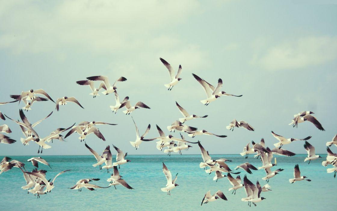 nature ocean gulls sky wallpaper