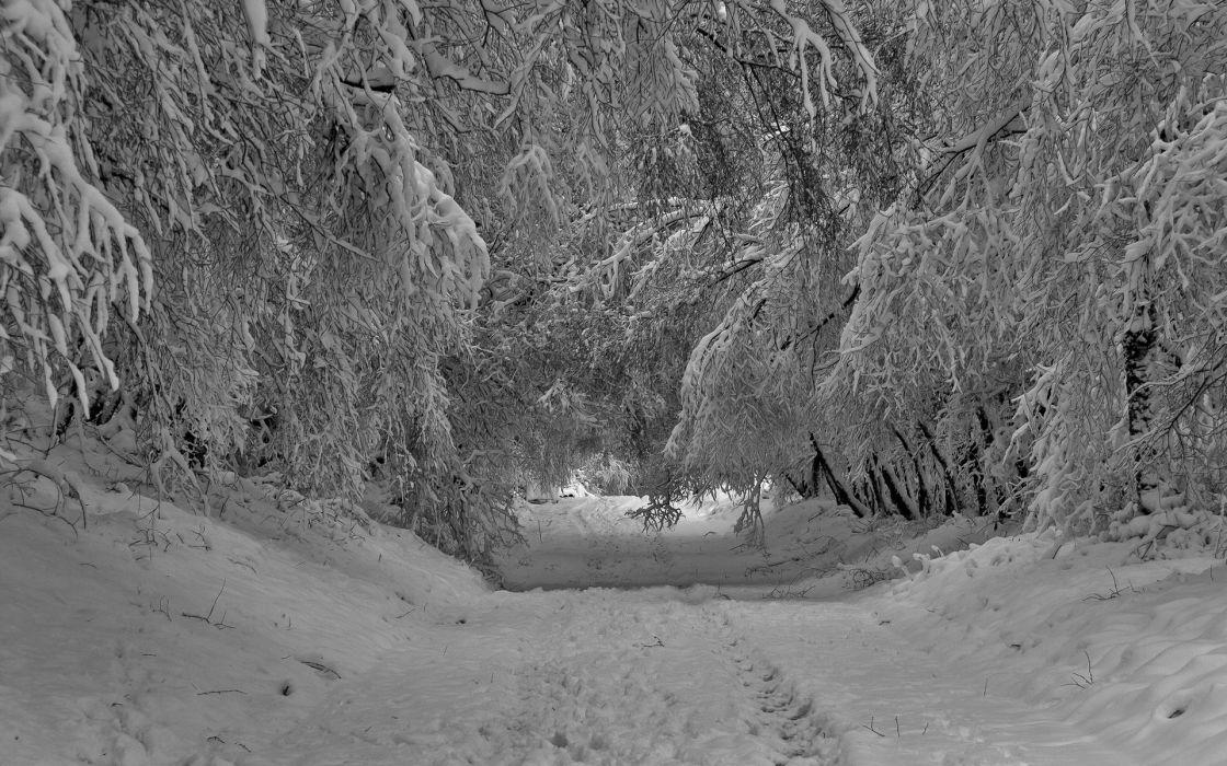roads trees forest winter wallpaper