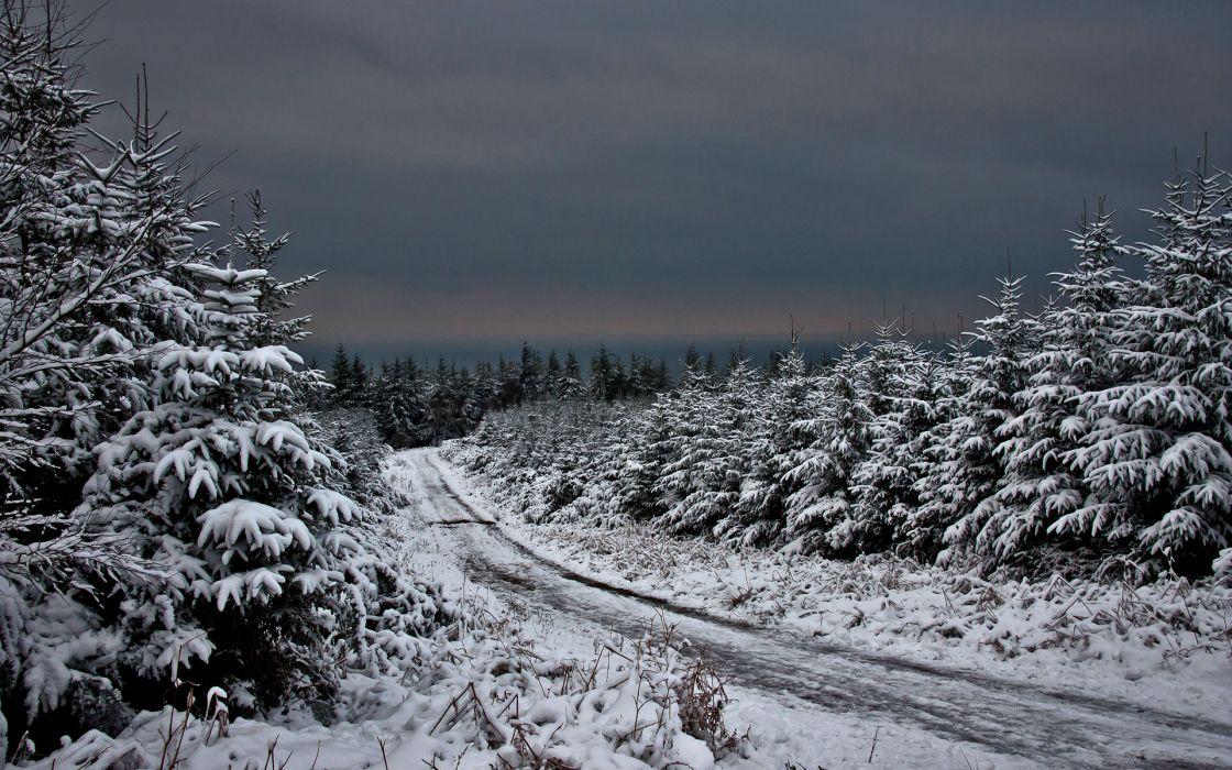 nature landscapes winter trees snow wallpaper