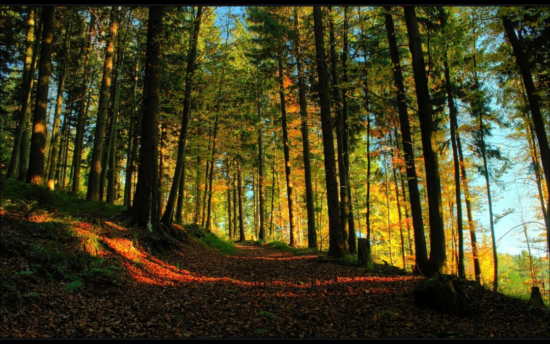 landscapes trees forest path autumn fall sunlight wallpaper