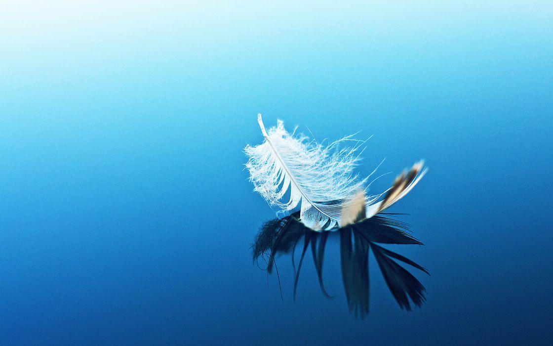 mood bokeh feather water reflection zen wallpaper