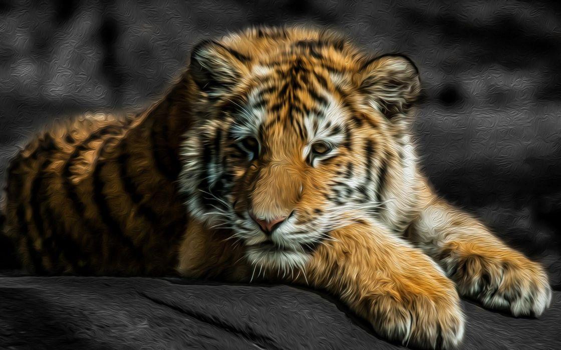 tigers art paintings wallpaper