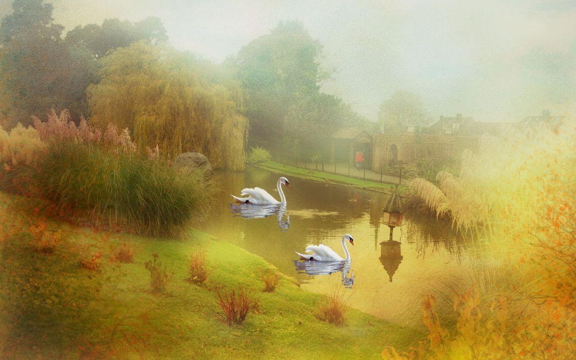 art paintings swans lakes ponds nature landscapes wallpaper