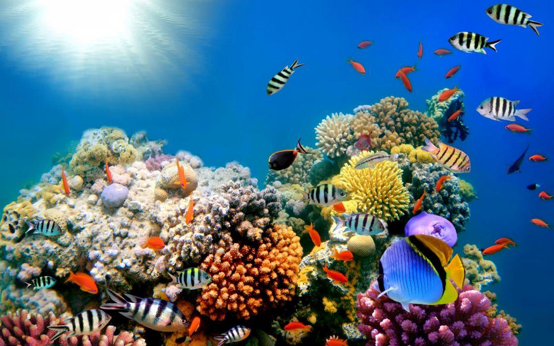 reef ocean sea underwater wallpaper