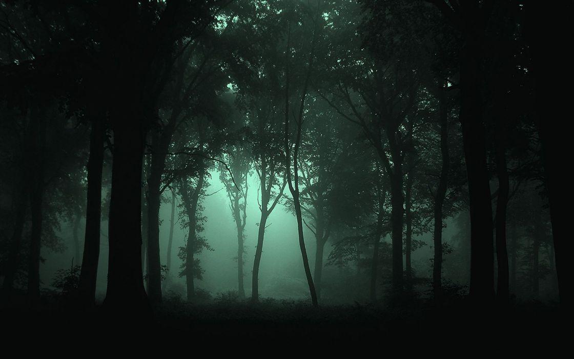 landscapes forest fog dark wallpaper