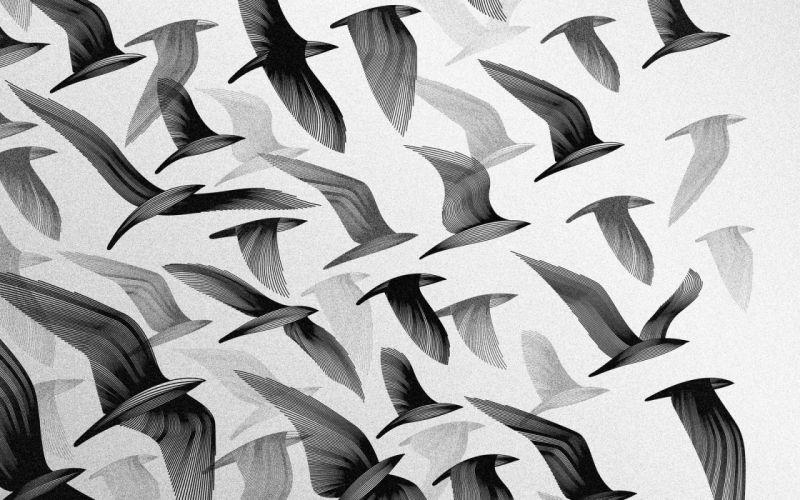 abstract birds vector art wallpaper