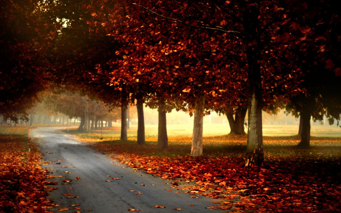 nature landscapes leaves autumn fall wallpaper