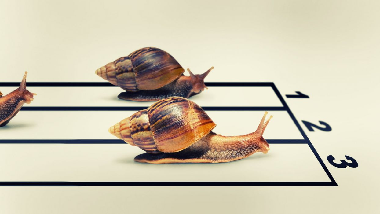 humor snail racing track sports wallpaper