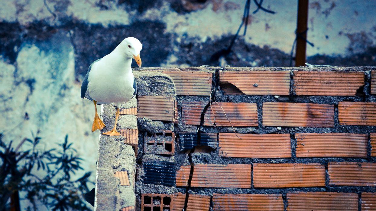 gulls brick wall wallpaper