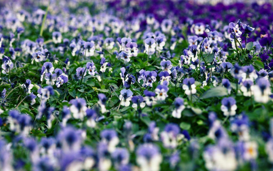 fields landscapes macro garden wallpaper