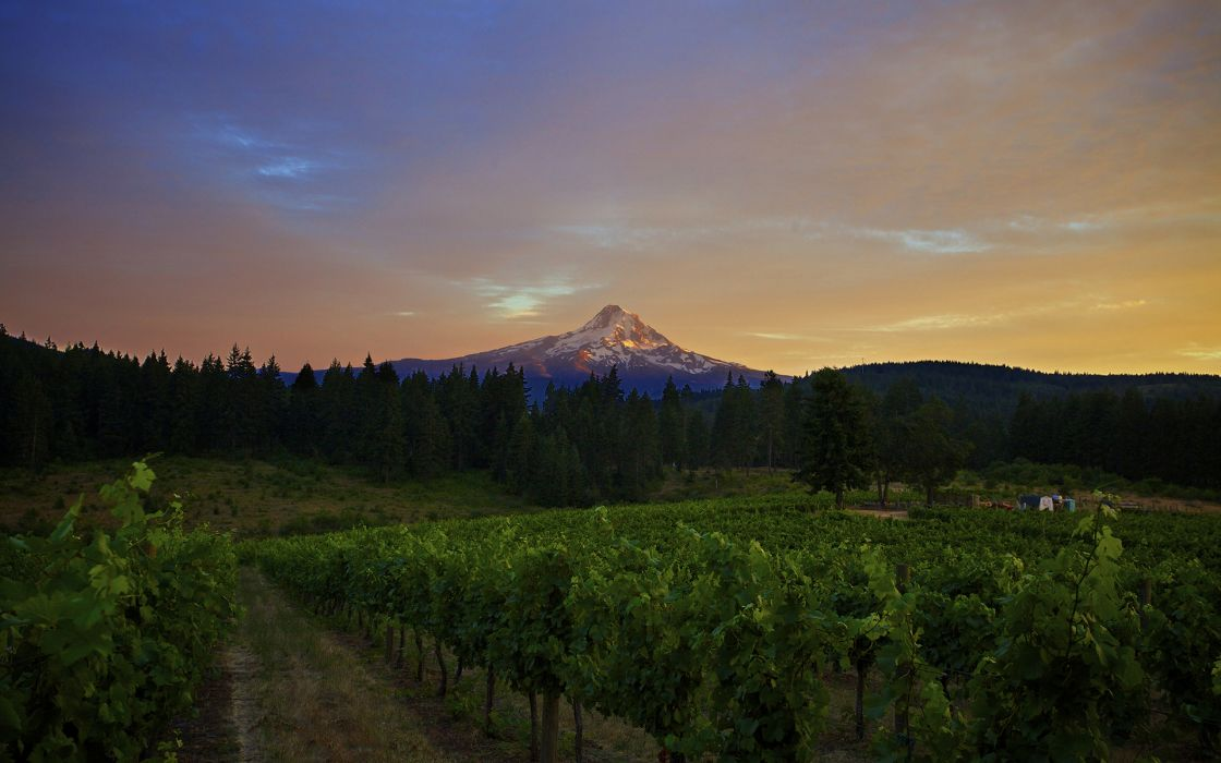 Vineyard Mountain Landscape Trees sky clouds sunset sunrise wallpaper
