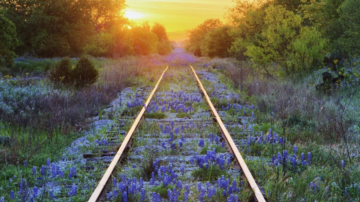 railroad mood flowers nature distance landscapes sunset sunrise tracks wallpaper