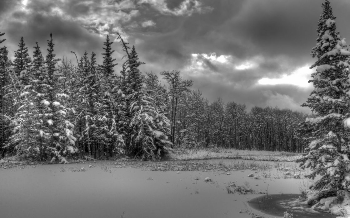 landscapes winter snow trees forest shore sky clouds hdr wallpaper
