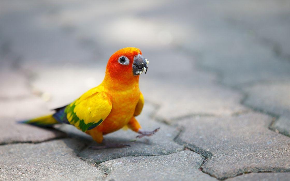 parrot humor wallpaper
