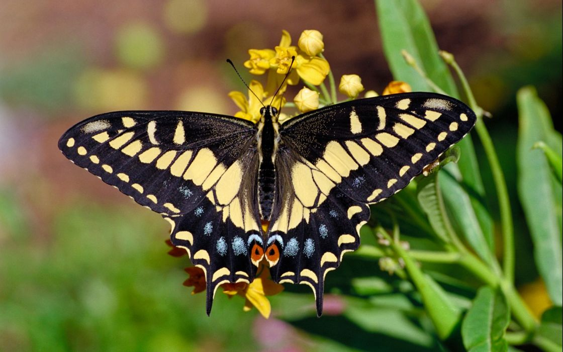 butterfly macro flowers plants nature wallpaper