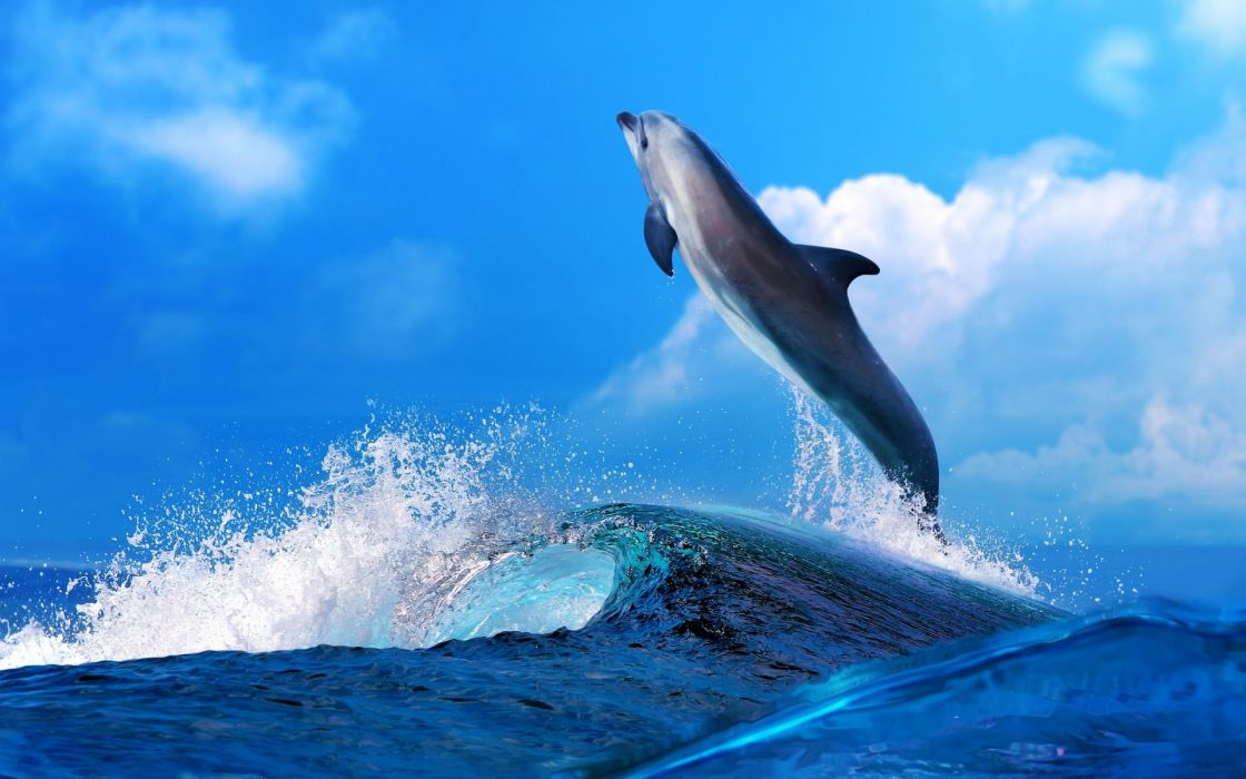 dolphin mood fun happy ocean sea waves splash drops wallpaper