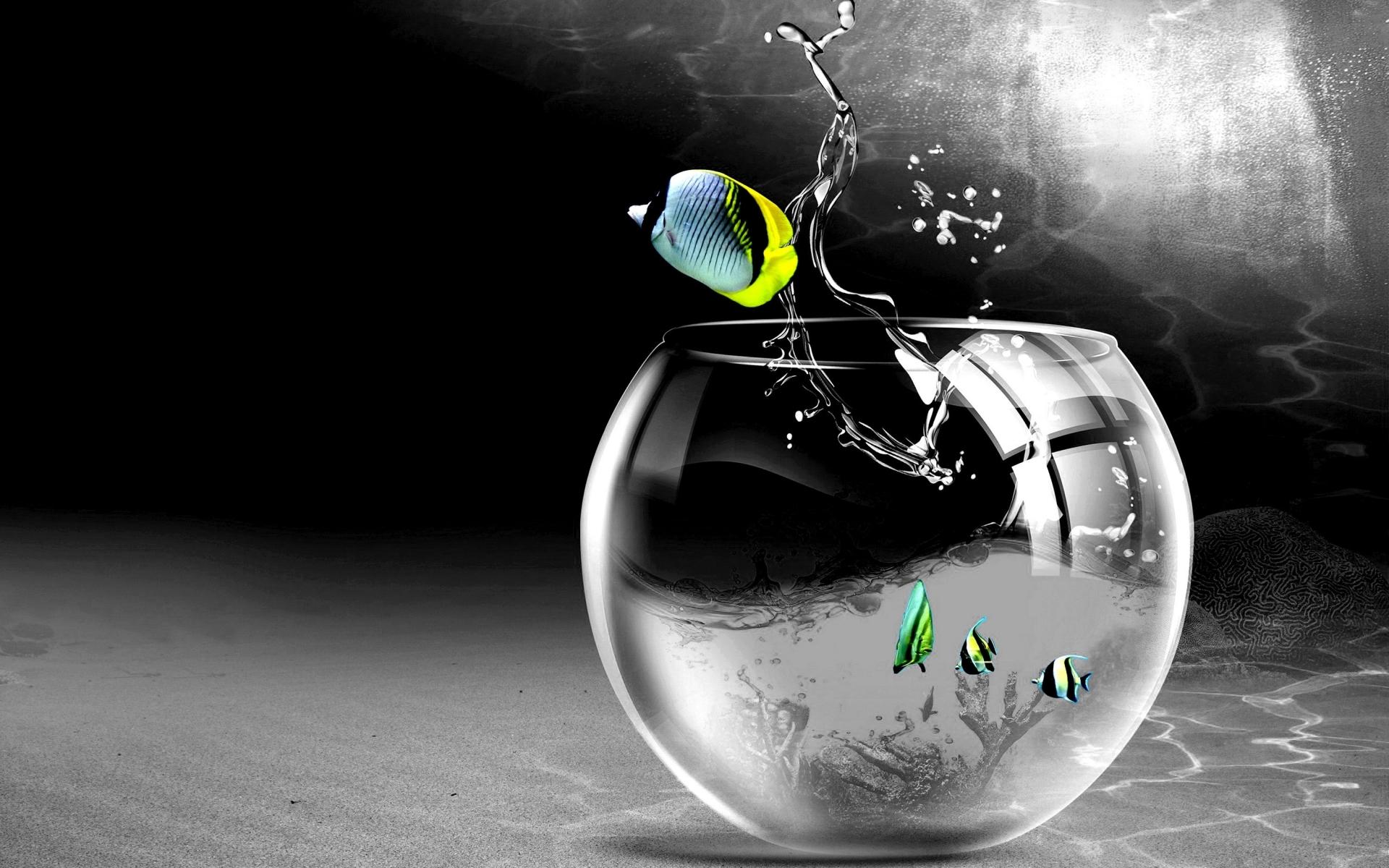 Cg Digital Art Bowl Aquarium Glass Drops Splash Wallpaper