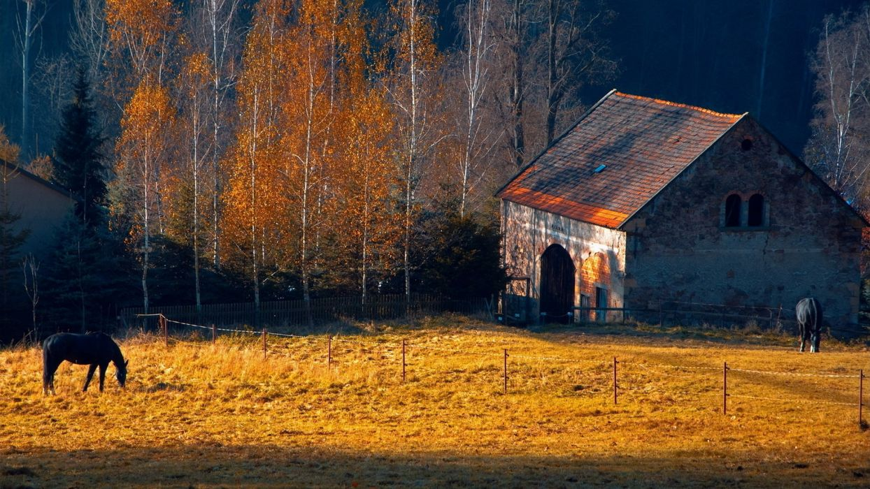 horses rustic farm barn landscapes buildings autumn fall trees wallpaper
