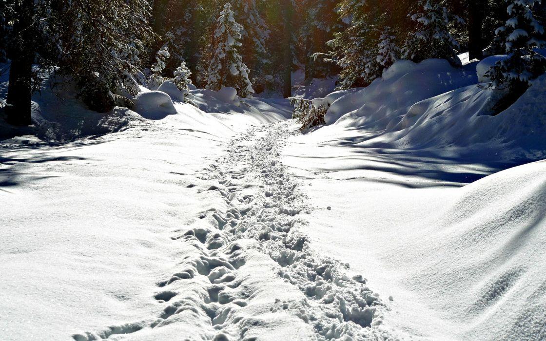 landscapes forest winter snow tracks path trail prints sunlight wallpaper
