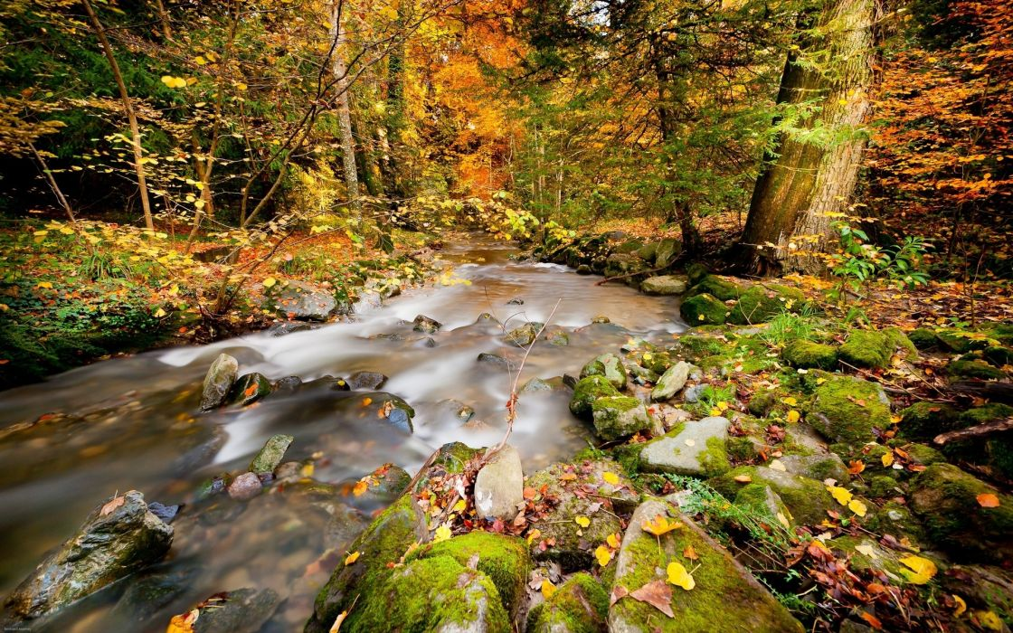 landscapes trees forest autumn fall leaves wallpaper