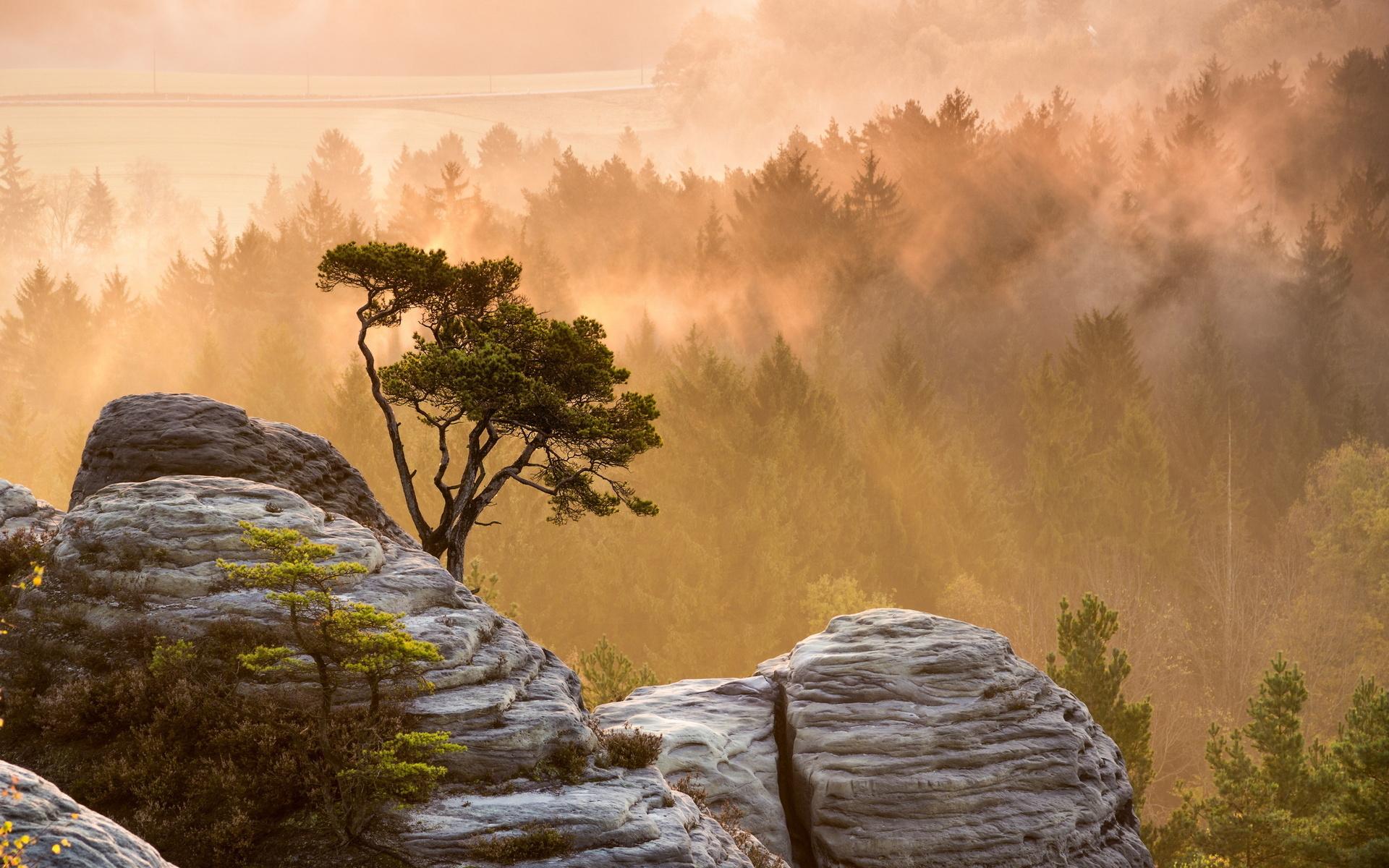 sun fog sunrise trees - photo #35