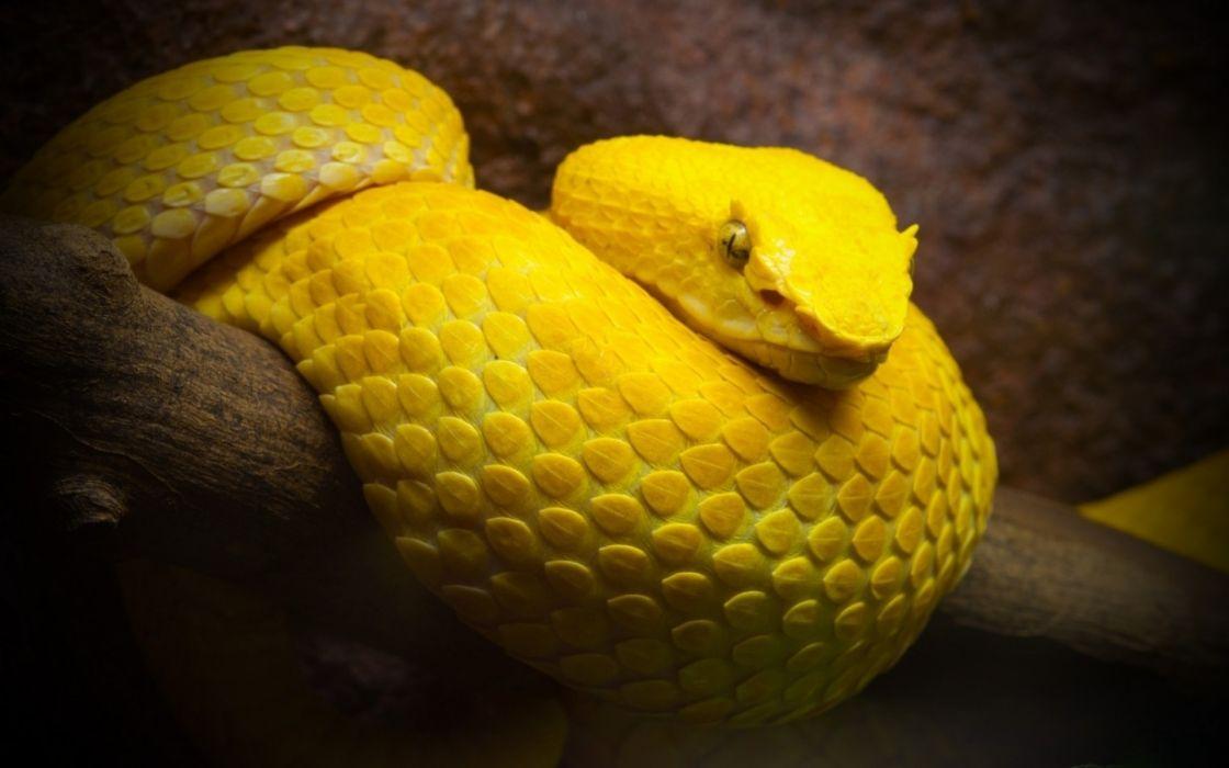 serpent snake wallpaper