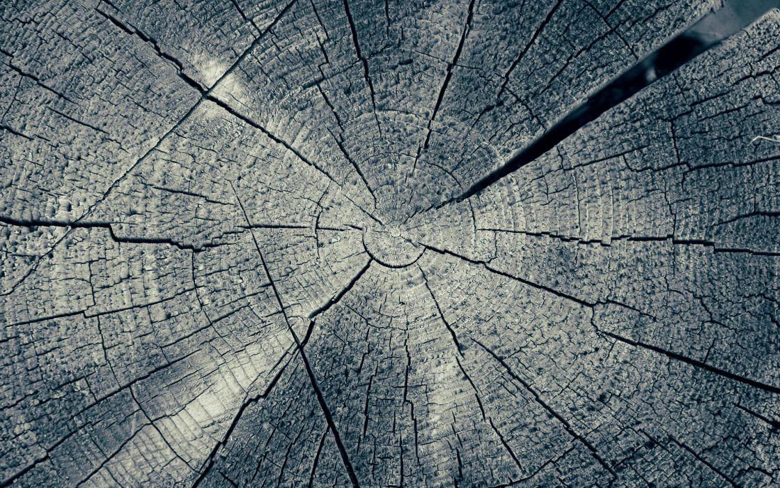 wood rings trunk trees wallpaper