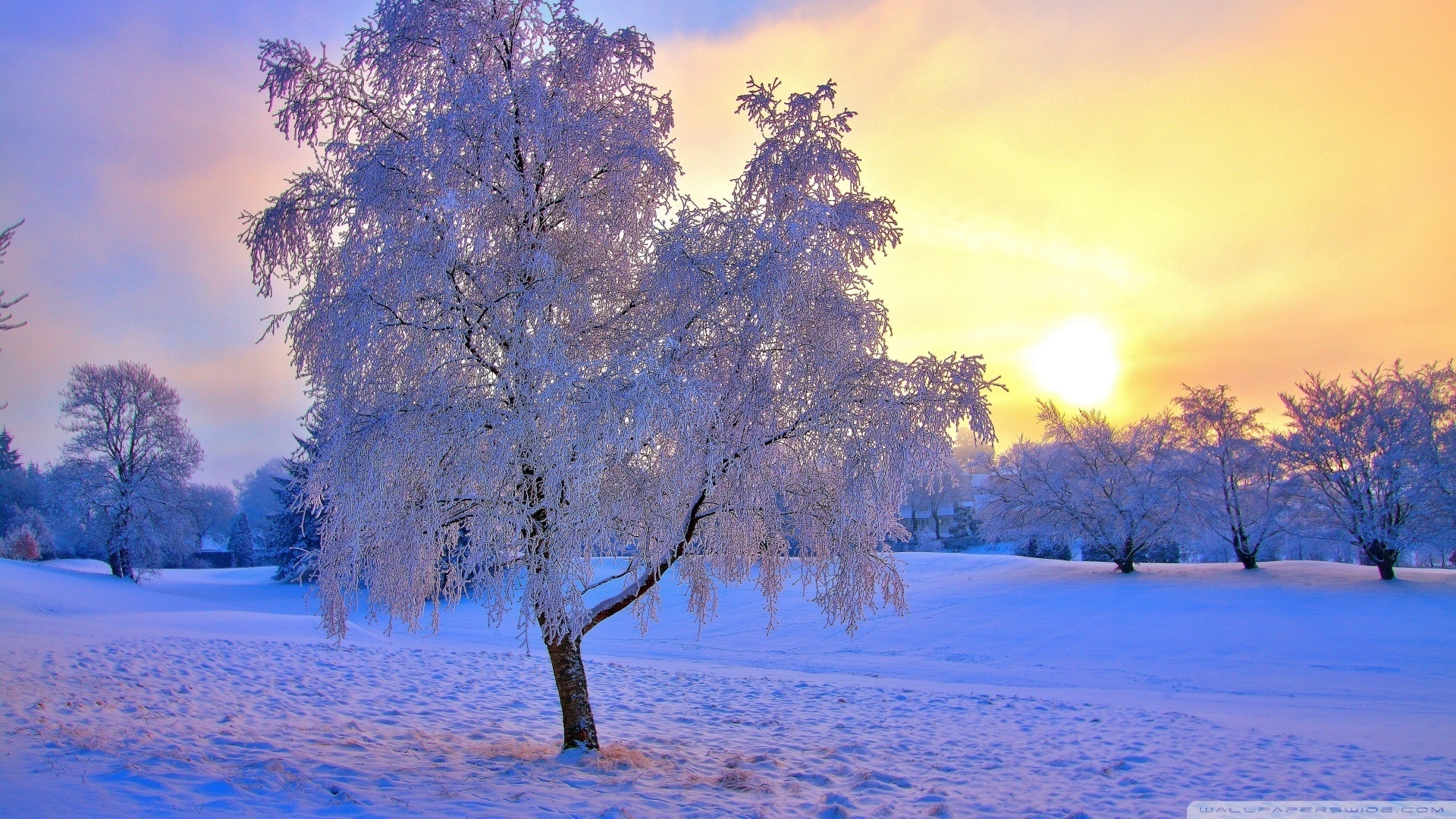 winter and snow trees - photo #10