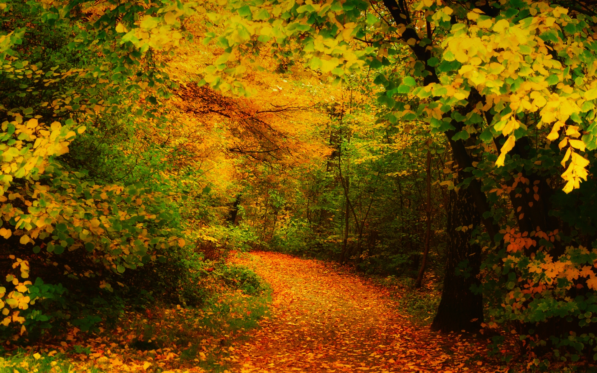 fall woods backgrounds wallpapers - photo #9