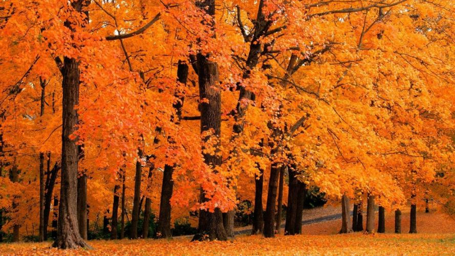 landscapes forest leaves autumn fall orange wallpaper