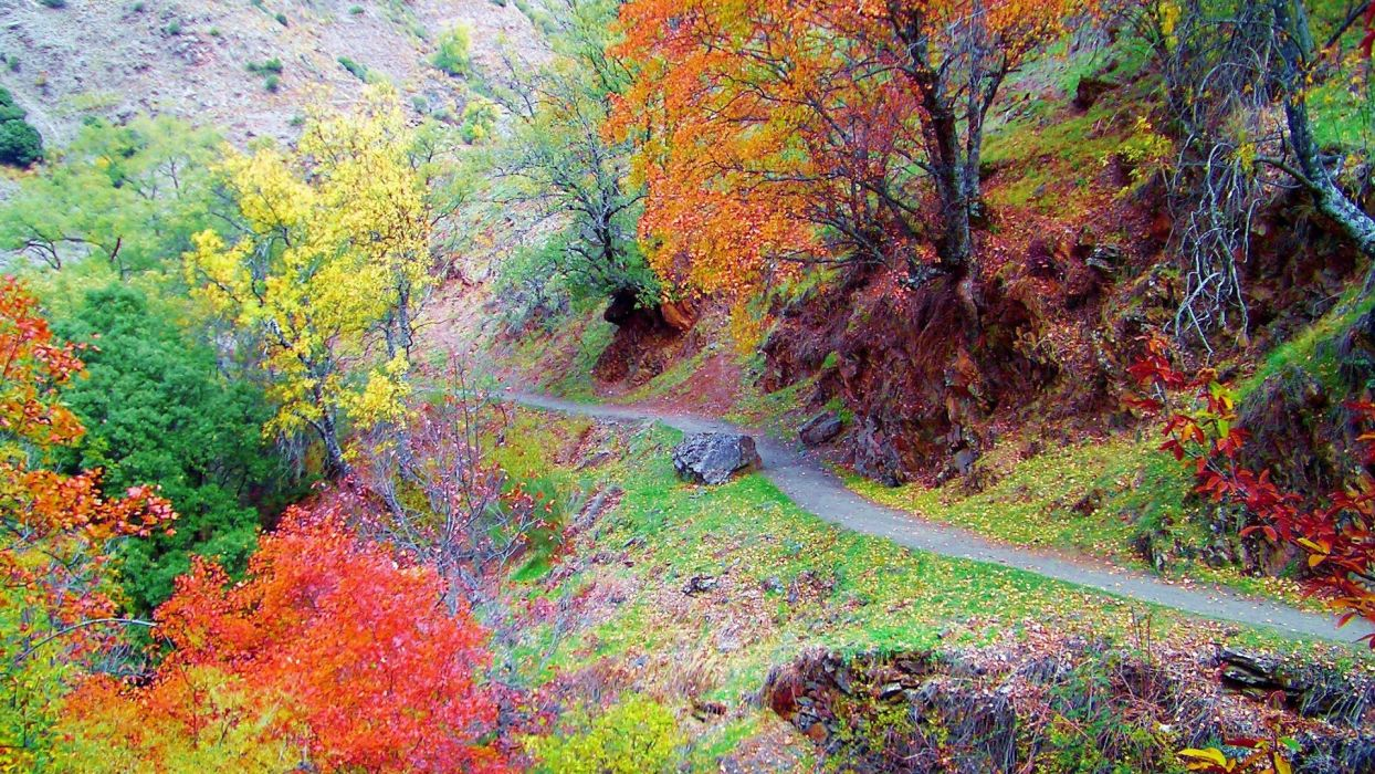 hills mountains trees forest autumn fall color path trail leaves wallpaper